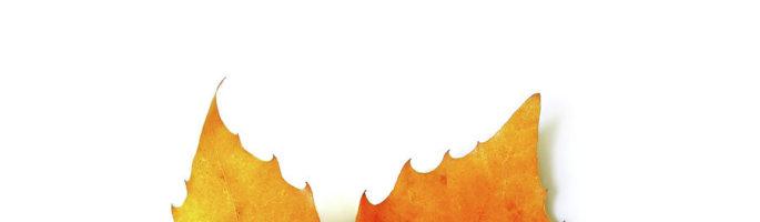 festa d'autunno 2017!